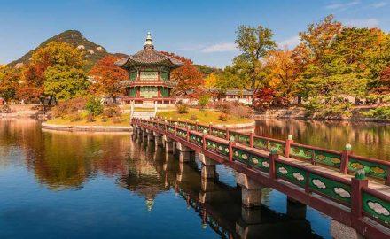 Cơ hội việc làm mở rộng đối với cử nhân ngôn ngữ Hàn Quốc