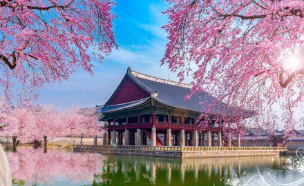 Tốt nghiệp ngành Tiếng Hàn bạn có thể làm công việc gì ?